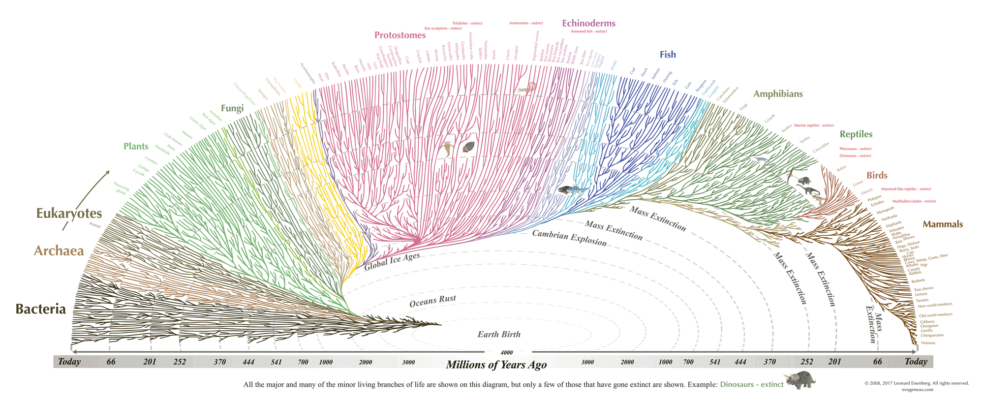 Notice the timescale is not linear. We have to wait 3.5 billion years until the Cambrian Explosion creates the first backboned animals and another 200 million years for backboned animals to emerge on land. From [evogeneao](https://www.evogeneao.com/learn/tree-of-life)